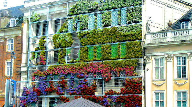 Living wall in Copenhagen Denmark