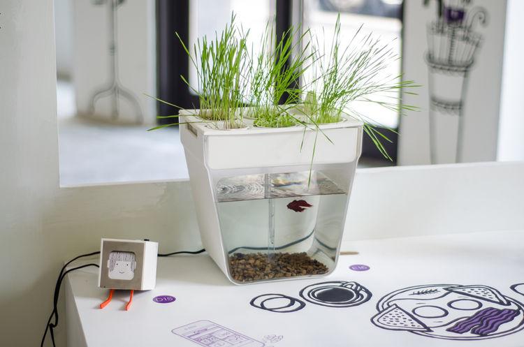 Little Printer printing system and Aquafarm aquaponics planter fish tank system