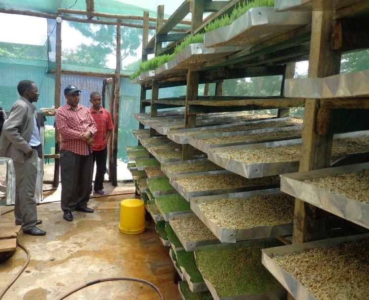subsistence farming philanthropy charity gift guide giving back 2013 Rwanda