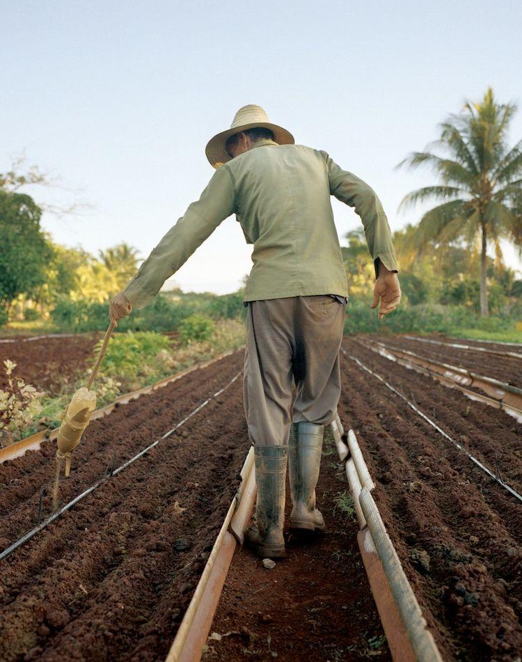 Farming Cuba: Organipónico 3