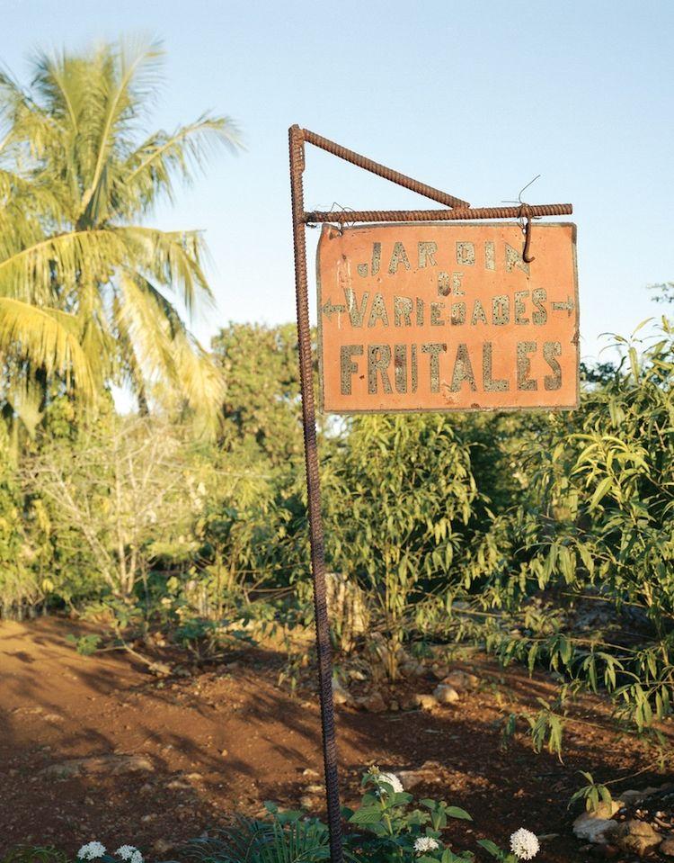 Farming Cuba: Organipónico 5