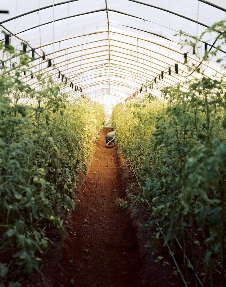 Farming Cuba: Greenhouse in Havana