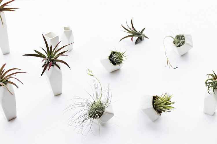 Mini Ceramic Air Plant Planters by Janelle Gramling