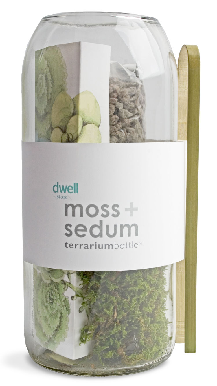 Terrarium kit including moss and sedum in a recycled wine bottle