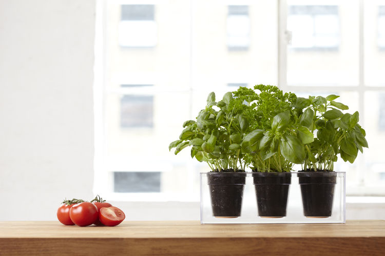 Triple acrylic planter perfect for herb gardens in an urban environment
