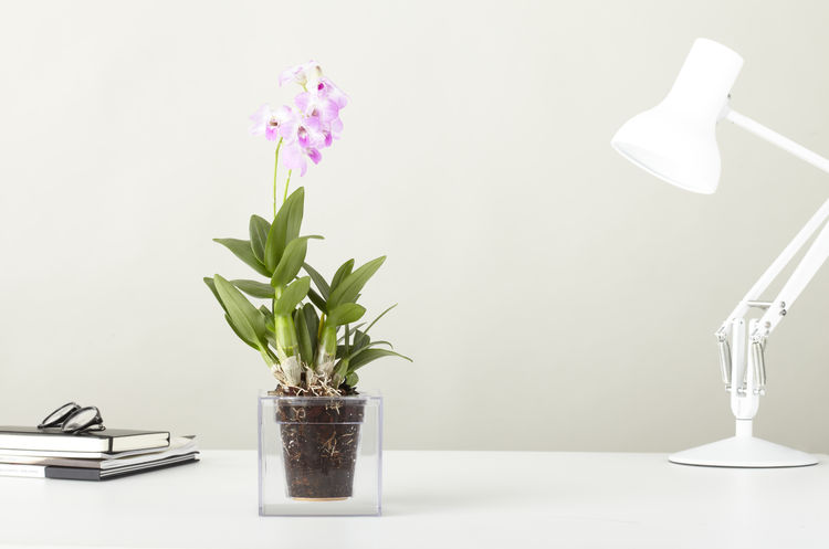 Acrylic cube plant for flowers or herbs in an urban environment