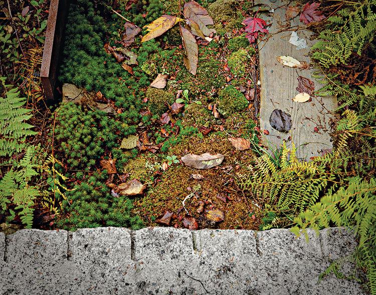 modern landscaping garden northeast granite stepstones salvaged cedar slabs