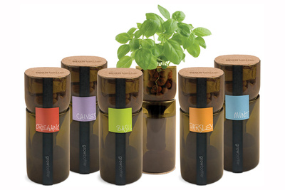 Grow Bottles from Branch