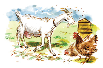 local food dan williams illustration