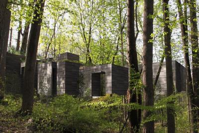 woodstock trees