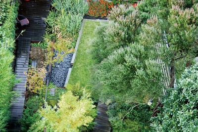 Marcel Wilson's backyard marshland with wooden boardwalk