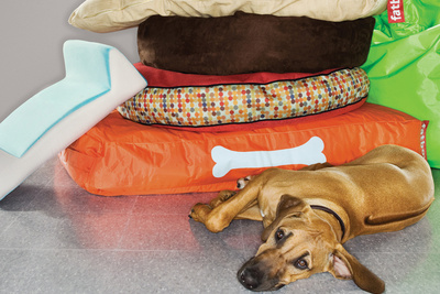 dog beds assortment