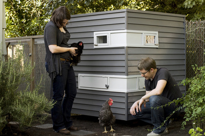 Modern backyard chicken coop
