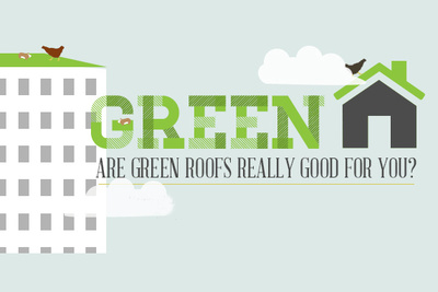 green roof movado  1