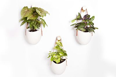 Light + Ladder Hanging Planter