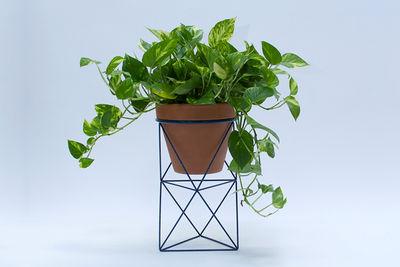 erictrine octahedron exclusive planter 675x450 2