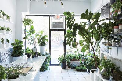 design finder the sill new york city plant shop gardening inside