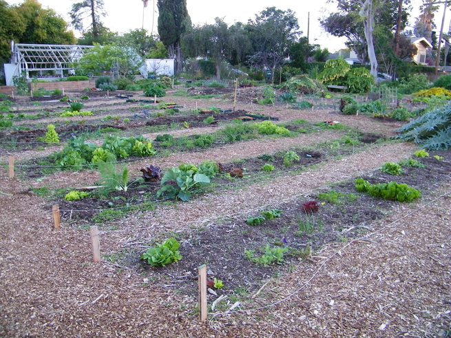 Learning Garden Rows