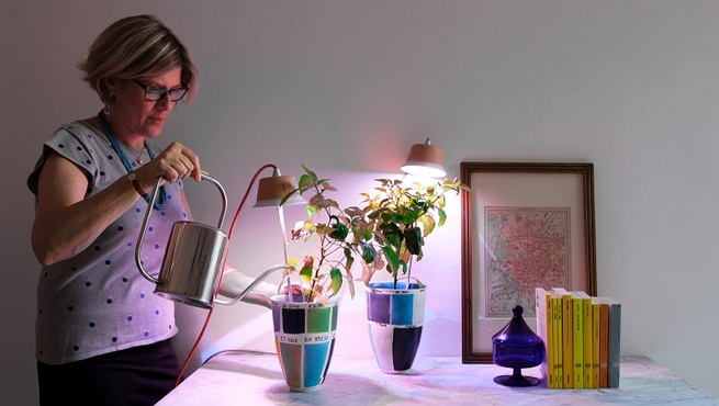 8 Products for Indoor and Urban Gardening