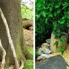 Use reclaimed logpoles to make a teepee that can be covered with annual vines in summer and burlap in winter, weave willow wands into a hut, or plant a weeping mulberry to form a natural green cave.Photo by Tim Gill of Rethinking Childhood.