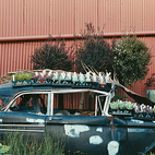 The moribund old car in time will be overgrown, like a ruin, with creeping foliage.