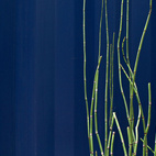 """Reeds grow from a tub outside the steel structure. """"We capture the graywater from the sink and shower, and use it to water the plants in the garden,"""" says Hill.  Photo by: Chris Cooper"""