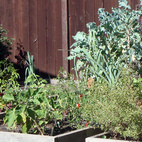 Ian built raised beds for flowers and vegetables and installed a drip irrigation system.