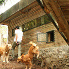 """Chivo and Gunter frolic on the sloping lot, which dips below the bridge connecting the house with the addition. """"We did three different types of windows,"""" notes Cano. """"Some allow ventilation and a great view of the trees, some let the kids feel closer to the main house where their parents are, and a couple more are for the dogs to jump outside."""" Photo courtesy T3arc"""
