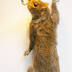 Another view of the Squirrel Lamp.