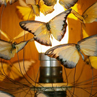 Here's a table lamp made from a flurry of 50 butterflies, hovering above a pesticide canister.