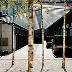 Birch trees add an Asian touch to the Greulich Hotel by Romero + Schaefle Architects.  Photo by: Gunnar Knechtel