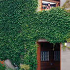A narrow garden and climbing ivy soften and brighten the house's blank front facade.  Photo by Juliana Sohn.