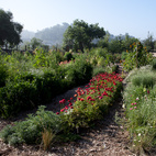 Just one month later the garden was much lusher.  Photo by: Catherine Ledner