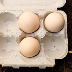 "In the warm months, each of the couple's three hens lays an egg a day. ""It's a good thing we can only have a few chicken,"" Snyder says. ""That'd be a lot of cholesterol to eat otherwise."" Fortunately for Snyder and Martin, the hens' production slows to an egg per week in cool months (and some chickens stop laying eggs altogether in the winter). But even in the summer, the couple has plenty of friends happy to share a scramble."