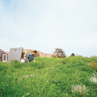 For his family's recently remodeled home in San Francisco, designer Peter Liang undertook a two-part landscaping renovation: He planted a living roof, then, with the help of landscape architect Andrea Cochran, redid the backyard.  Courtesy of Ike Edeani .