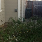 Here's the space before. When Lee purchased the house (he's its first owner) it didn't come with a finished yard.