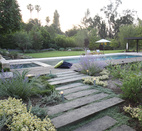 For a Los Angeles home, Aoyagi used an IdealMow lawn of native grasses, and Dymondia, Juncus, and Hummingbird Sage.  Courtesy of Orly Olivier.