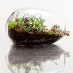 botany factory terrarium manatee thumb