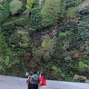 madrid living wall  1