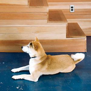 benoit residence wooden stairs dog
