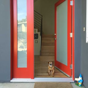 dog red front door instagram