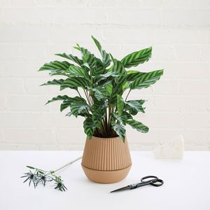 umbrashift pleatedearth planter self watering enviro