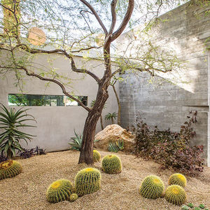 indian summer native plants courtyard garage