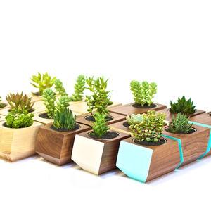 boxcar planter family
