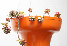 Wallter will introduce this new planter Pot at Dwell on Design in Los Angeles June 24-26, 2011.