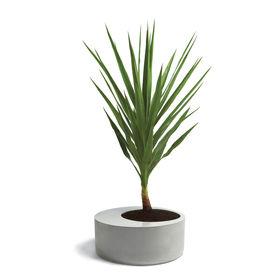 x large obleeek leo estevez obleeek objects planter