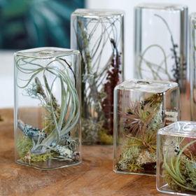 Cube Aerium Terrarium by Flora Grubb