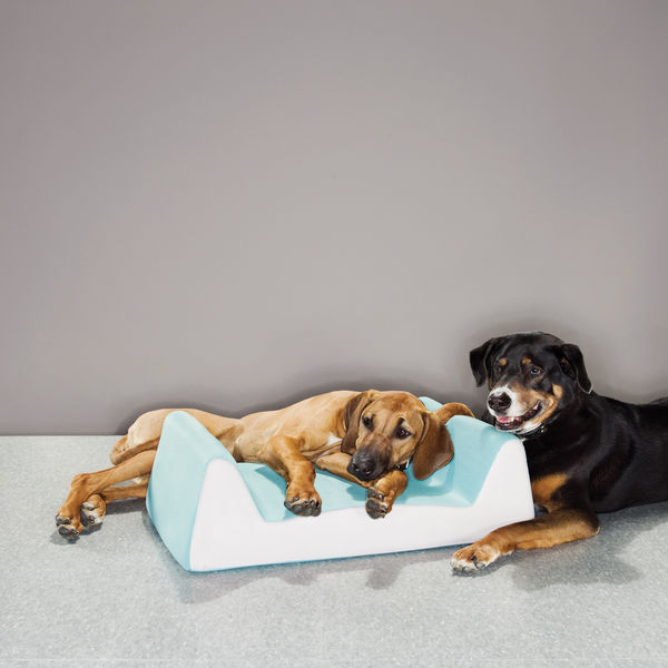 dog beds valle bed
