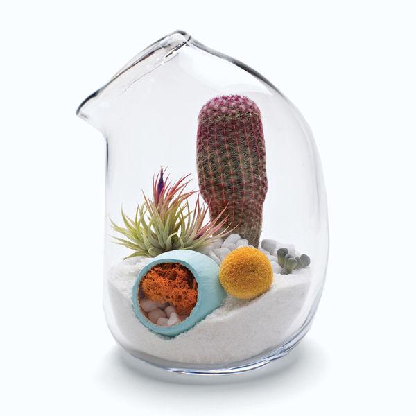 phlox by litill terrarium