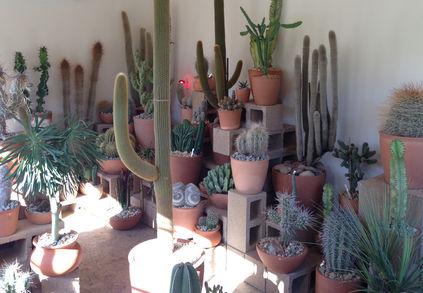 cactus store los angeles 5